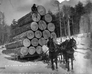 Big load of logs