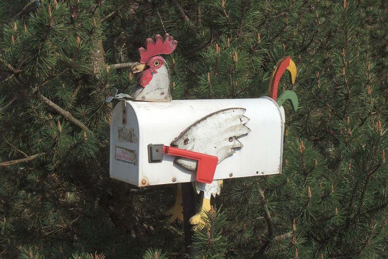 Mailbox chicken