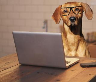Dog-using-laptop no apple