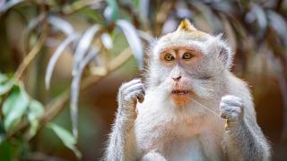 Monkey flossing-4550160_1920