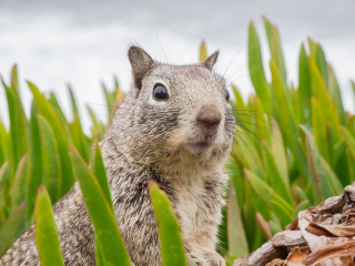 Surprised squirrel-3786845_1920