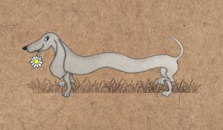 Funny-dachshund cropped